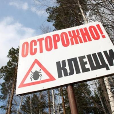 Вряде регионов Российской Федерации начался сезон активности клещей