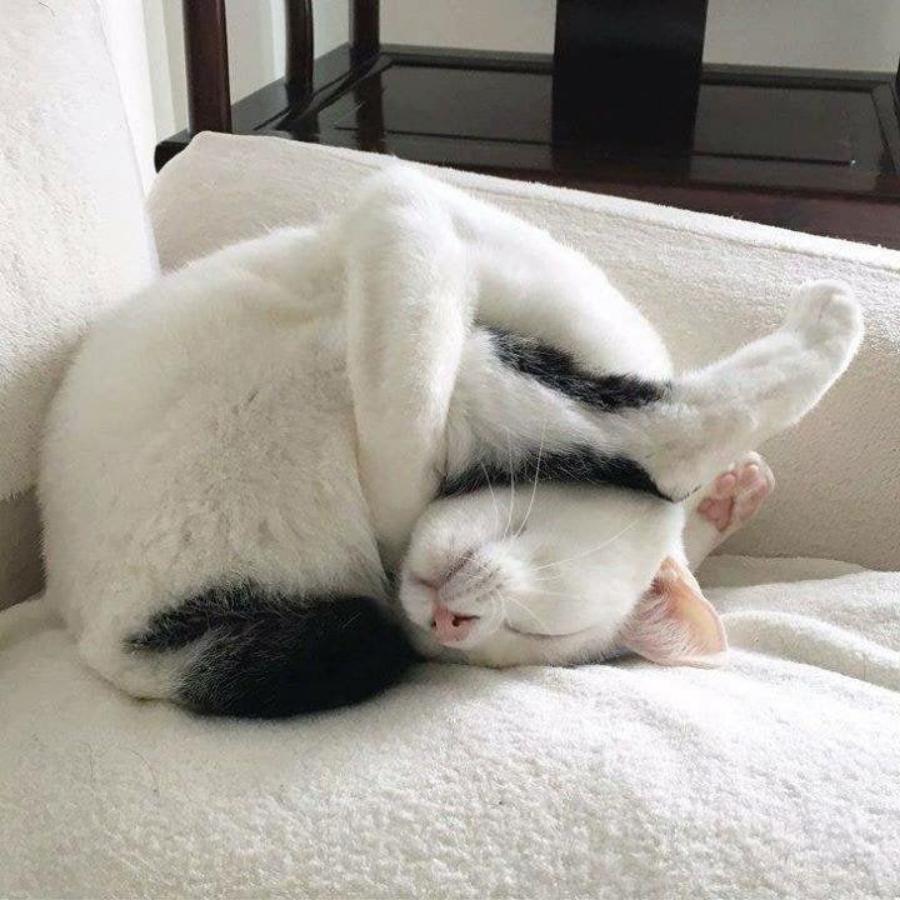 Сплю картинки смешные, видео поздравление картинка